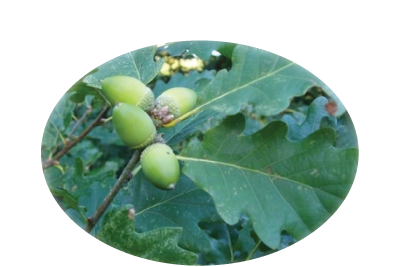 Argoed Community Council